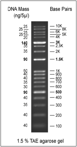 Biomol 1kb/100bp combined DNA Ladder, ready-to-use