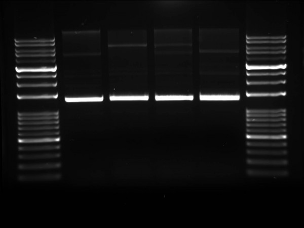 AGAROSE High resolution - high gel strength