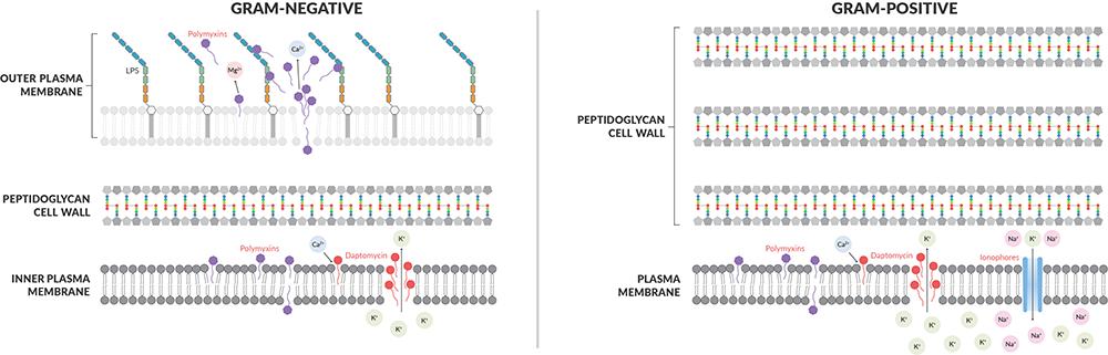 Plasma-Membrane-Function