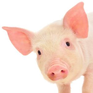 Porcine Complement C5a anaphylatoxin (C5) ELISA Kit