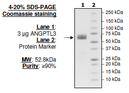 Angiopoietin-like 3, FLAG-tag