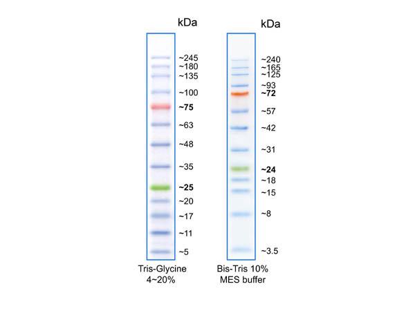 Opal Prestained Protein Standard 3.5-245kDa