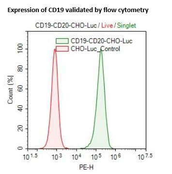 CD19 / CD20 / Firefly Luciferase CHO Cell Line