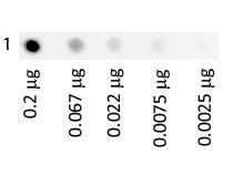 Human Transferrin Fluorescein Conjugated