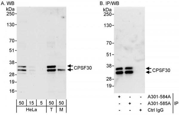 Anti-CPSF30