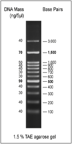 Biomol 100bp DNA Ladder 2, ready-to-use