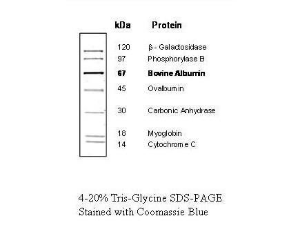 Protein Molecular Weight Marker (14-120kDa)