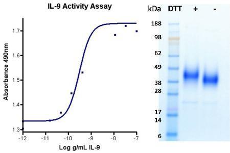 Interleukin 9 (IL-9), human recombinant (HumaXpress)