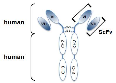Anti-EGFP, mAB (rec.), clone G3