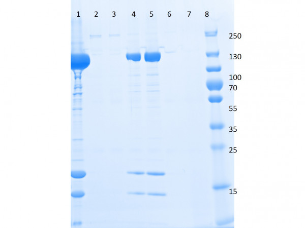 Triple FLAG(R) Peptide