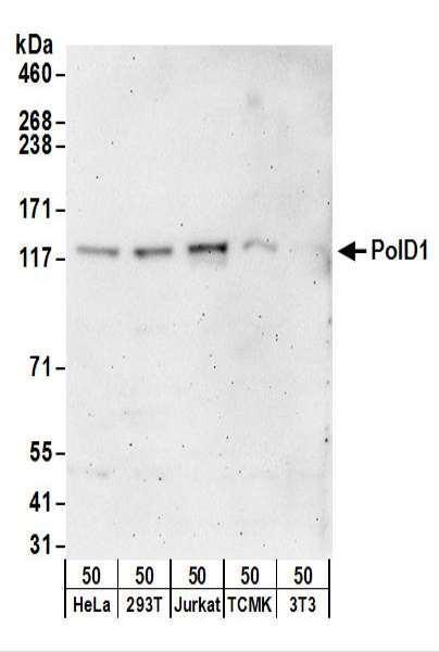 Anti-PolD1