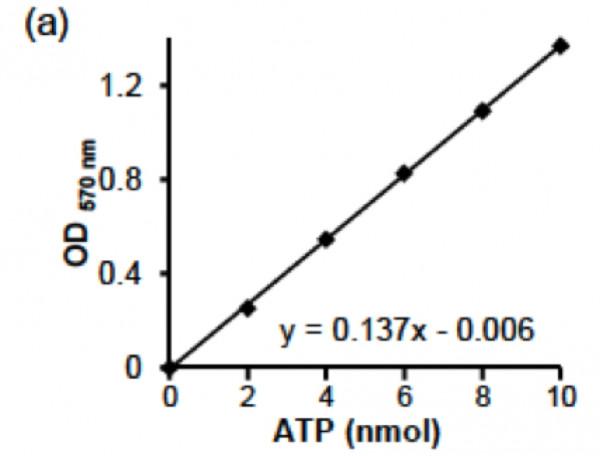 ATP Colorimetric/Fluorometric BioAssayKit