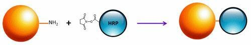 ReadiUse(TM) Preactivated HRP NHS ester