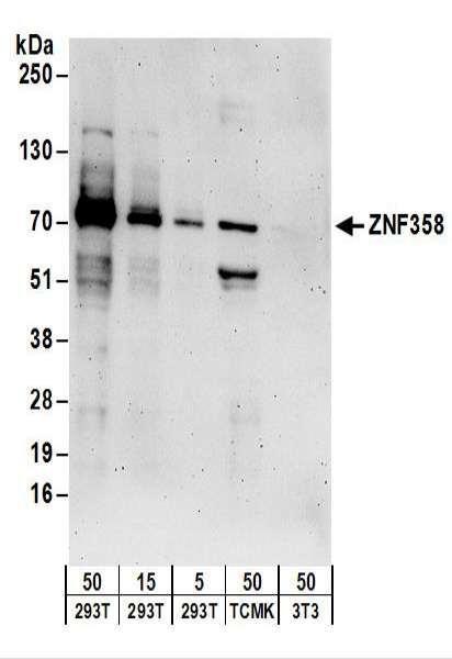 Anti-ZNF358