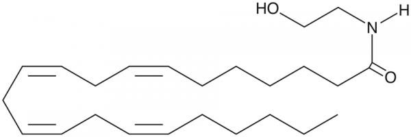 Docosatetraenoyl Ethanolamide