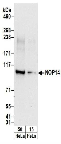 Anti-NOP14