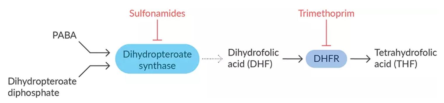 antibiotics-essential-metabolite-synthesis