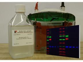Blocking Buffer for Near Infra Red Fluorescent Western blotting