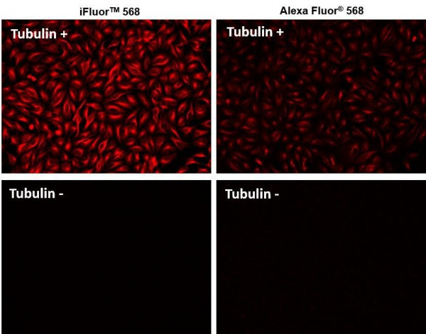 iFluor(TM) 568 goat anti-mouse IgG (H+L) *Cross Adsorbed*