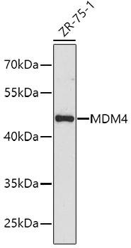 Anti-MDM4