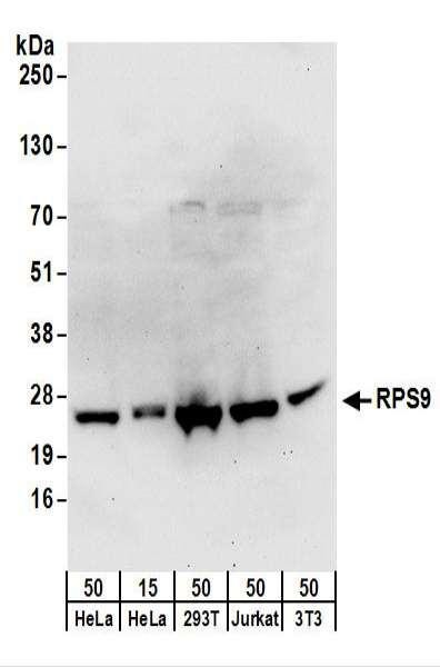 Anti-RPS9