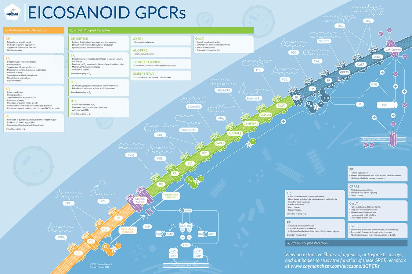 Eicosanoid GPCRs