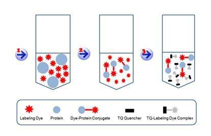 ReadiLink(TM) Rapid Cy7 Antibody Labeling Kit *Microscale Optimized for Labeling 50 µg Antibody Per