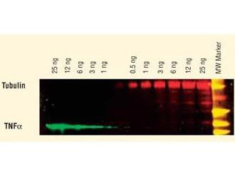 Anti-Guinea Pig IgG (H&L) (Min X Bv Ch Gt Ham Hs Hu Ms Rb Rt & Sh Serum Proteins), DyLight 649 conju