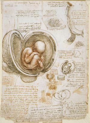 Leonardo-da-Vinci-Foetus