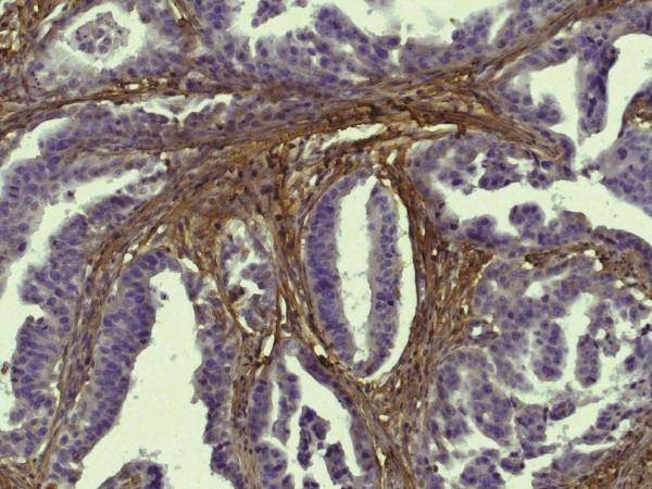 Anti-Collagen I (Biotin)