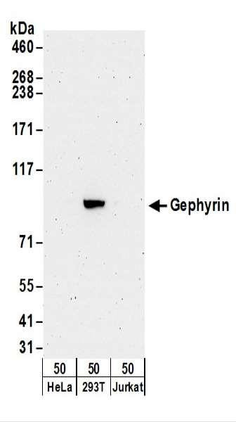 Anti-Gephyrin