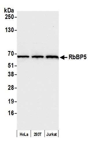 Anti-RbBP5