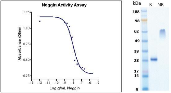 Noggin, human recombinant (HumaXpress)