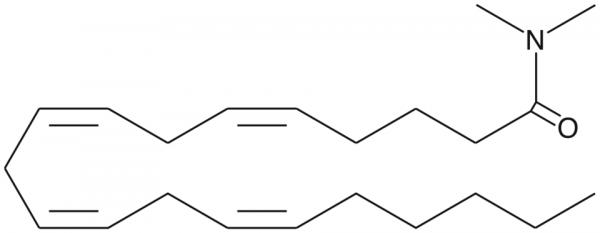 Arachidonoyl-N,N-dimethyl amide