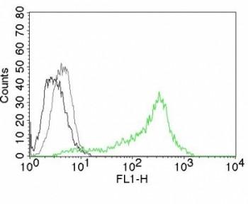 Anti-Nucleolin, clone 364-5