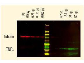 Anti-GFP (Min X Hu Ms and Rt Serum Proteins), DyLight 680 conjugated