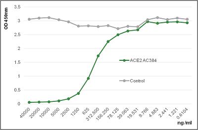 Anti-ACE2 (human), mAb (blocking) (AC384) (preservative free)