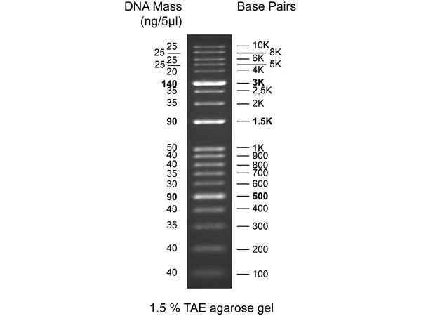 Diamond DNA Ladder 100-10Kbp