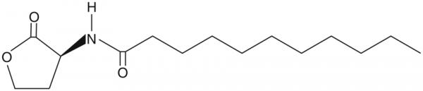 N-undecanoyl-L-Homoserine lactone