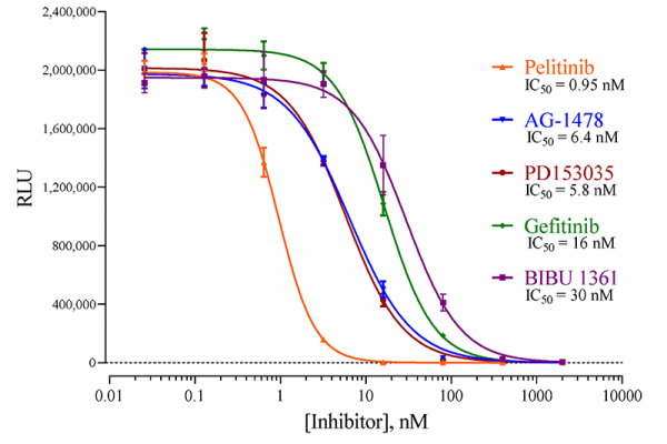 Epidermal Growth Factor Receptor 1 (EGFR1) (Human) Reporter Assay System