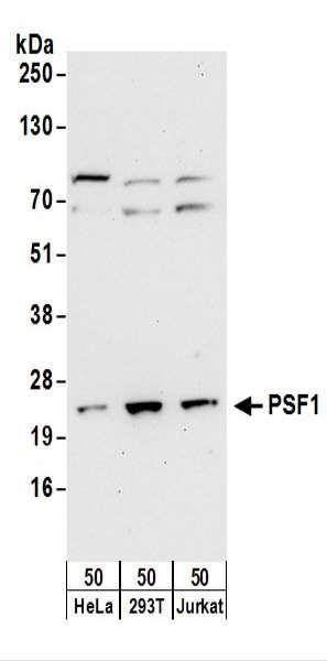 Anti-PSF1