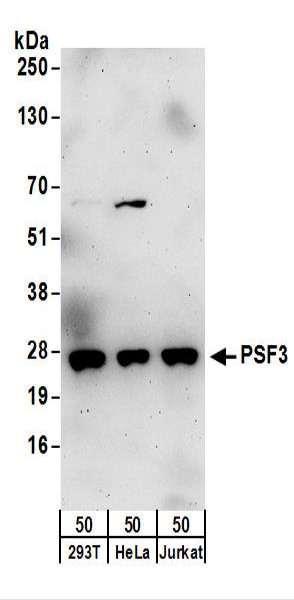 Anti-PSF3