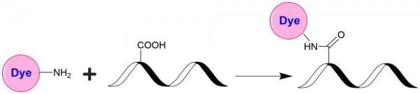 iFluor(TM) 350 amine
