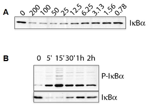 IL-1beta (human, rec.) (untagged) (MultiPack, 3 x 10µg)