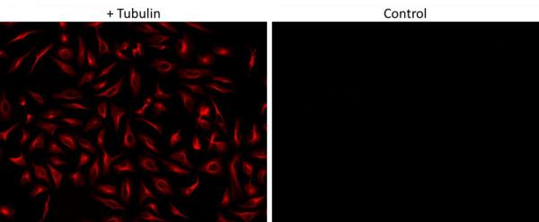 ReadiLink(TM) Rapid AF594 Antibody Labeling Kit *Rapid Alexa Fluor 594 Labeling*