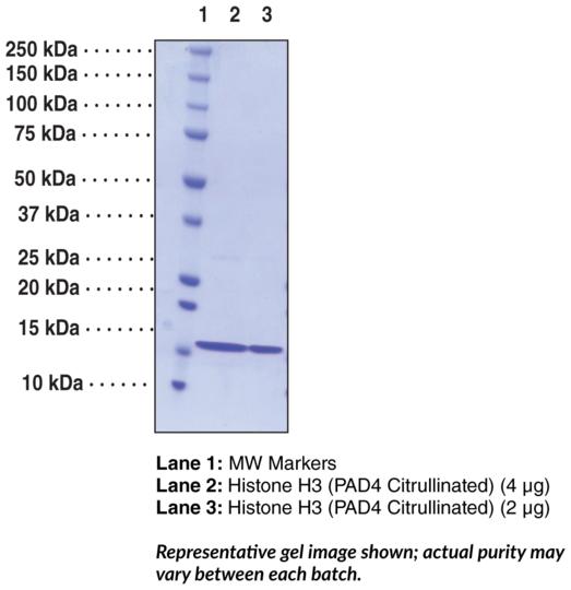 Citrullinated Histone H3 (human recombinant)