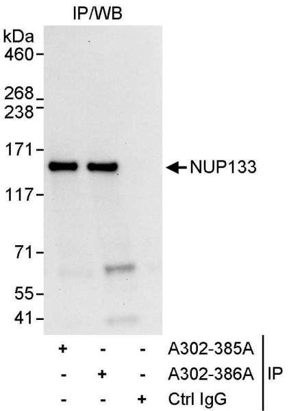 Anti-NUP133