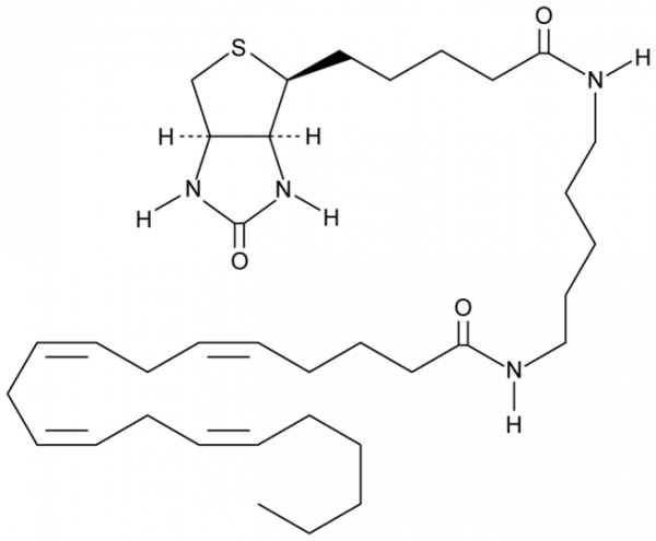Arachidonic Acid-biotin