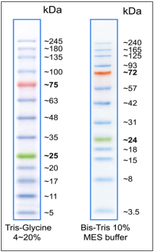 Biomol BLUEplus-wide prestained Protein Ladder (3.5-245 kDa)