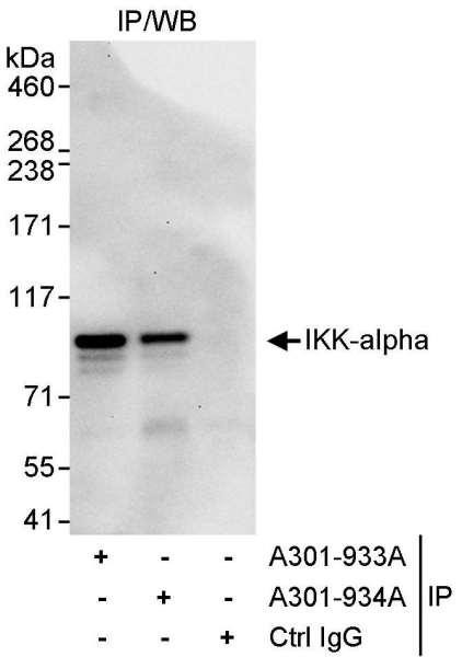 Anti-IKK-alpha